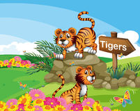 Two tigers beside a signboard. Illustration of the two tigers beside a signboard Stock Photos