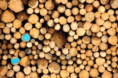 Two timber logs with blue paint in pile Royalty Free Stock Photo