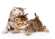 Two tiny british kittens looking away. isolated on white Royalty Free Stock Images