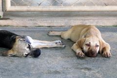 Two puppies are sleeping on a pavement on a street. Royalty Free Stock Images