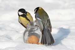 Two tits and a glass jar Royalty Free Stock Photography