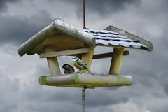 Two tits taking nuts from bird feeder. On a cloudy day Royalty Free Stock Photography