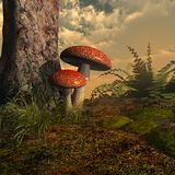 Two toadstools Royalty Free Stock Images