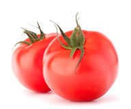 Two tomato vegetable Stock Images
