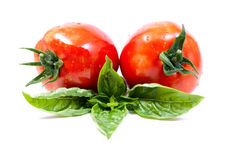 Two tomatoes and basil Royalty Free Stock Images