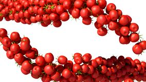 Two Tomatoes Cherry flows isolated Stock Photo