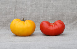 Two tomatoes. Red and yellow. Harvesting. A tightly woven linen as a background Stock Photo