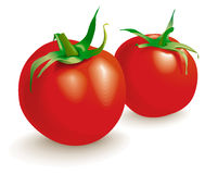 Two Tomatoes Vegetables.Vector Royalty Free Stock Images