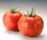 Two tomatoes with water drops. On white background Stock Images