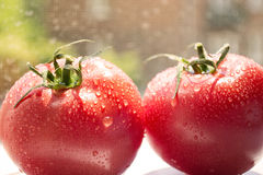 Two tomatoes. With water drops stock photo