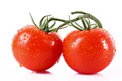 Two tomatos isolated Stock Images