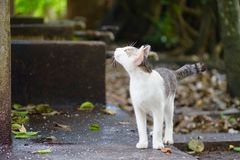 Two tone cat. cute cat. smart cat. happy cat stock photography