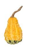Two tone gourd Royalty Free Stock Photos