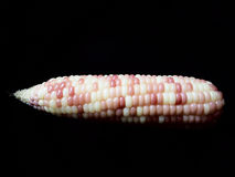 This is two tone maize on black background Stock Image
