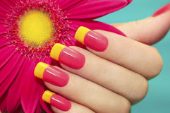 Two-tone manicure. Two-tone manicure with pink and yellow varnish with flower gerbera on a blue background Royalty Free Stock Images