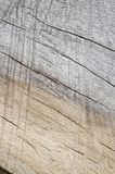 Two Tone Wood Grain #2. A macro of aged hardwood showing a two toned grain Stock Images