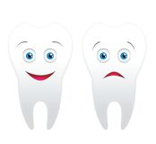 Two tooth. Isolated on white background Stock Images