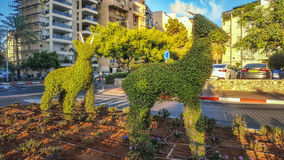 Two topiary goats posing in sunrise light Stock Photo