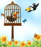 Two toucan birds in garden Stock Photography