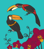 Two toucan and orhideni Stock Image