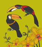 Two toucan and orhideni Royalty Free Stock Images