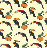 Two toucan and persimmon Royalty Free Stock Images