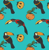 Two toucan and persimmon Stock Image