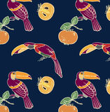 Two toucan and persimmon Royalty Free Stock Image