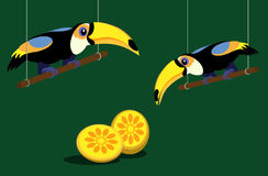 Two toucans Stock Images