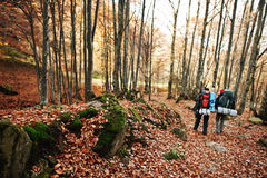 Two tourist with backpack walking down the autumn forest.  Stock Photo