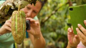 Two Tourist Woman Taking Photos Of Cocoa Fruit. In Ecuador stock video footage