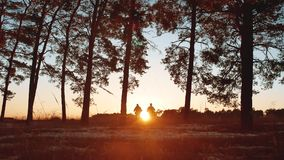 Two tourists men silhouette sunset go hiking in the forest sunlight . travel travel tourism group of tourists walking. Two tourists men silhouette sunset go stock video