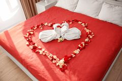 Two towel swans and rose petals on bed. In hotel room stock photography