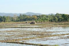 Two tractor cars plowed soil in rice field land,Landscape rural in Chiang Mai,Thailand stock photo