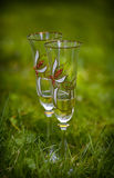 Two transparent glasses with decorative drawings of flowers Stock Photos