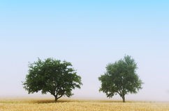 Two tree Royalty Free Stock Images