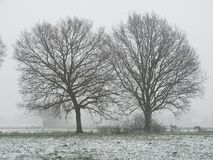 Two tree in contrast with two horses in the distance stock photos