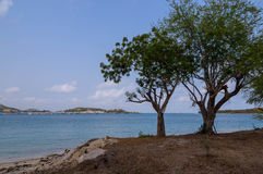 Two tree on sea Royalty Free Stock Photos