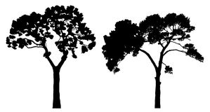 Two tree silhouettes on white Stock Photography