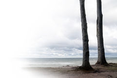 Two tree trunks standing like friends on the beach, overlooking Royalty Free Stock Photo