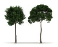 Two Tree Stock Image