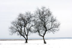 Two tree on winter field Royalty Free Stock Image