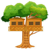 Two treehouses in the tree Royalty Free Stock Image