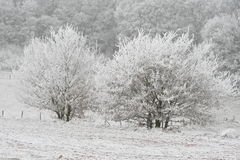 Two trees Stock Images