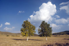 Two trees. On the prairie Royalty Free Stock Images