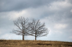 Two trees Stock Photos