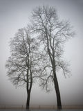 Two trees Stock Image
