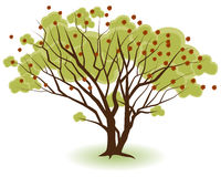 Two Trees. Growing together isolated on a white background Vector Illustration