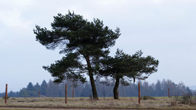 Two trees Royalty Free Stock Images