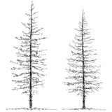 Two trees. Schematic illustration of two trees Royalty Free Stock Image